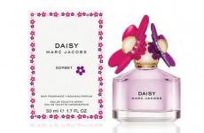 wednesday-daisy-sorbet