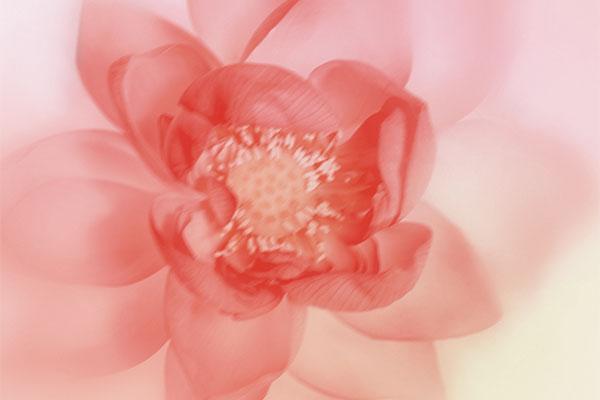 giorgio armani flower