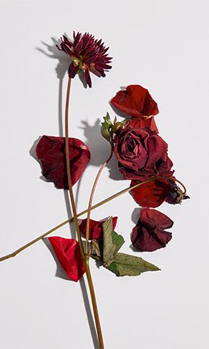 burberry flowers