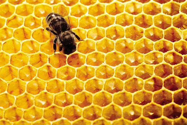 guerlain's black bee