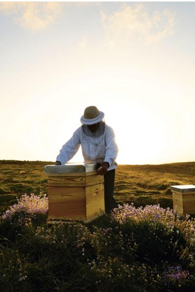 a beekeeper tending Black Bees